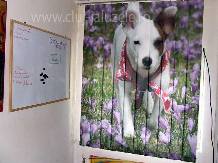 Galerie Jaluzele Personalizate Cluj | Lexundros  Jaluzea personalizata cu animalul tau de companie.