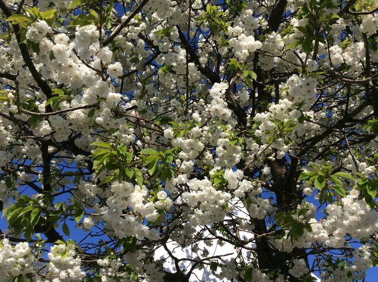 Glorious blossom has burst out in early May