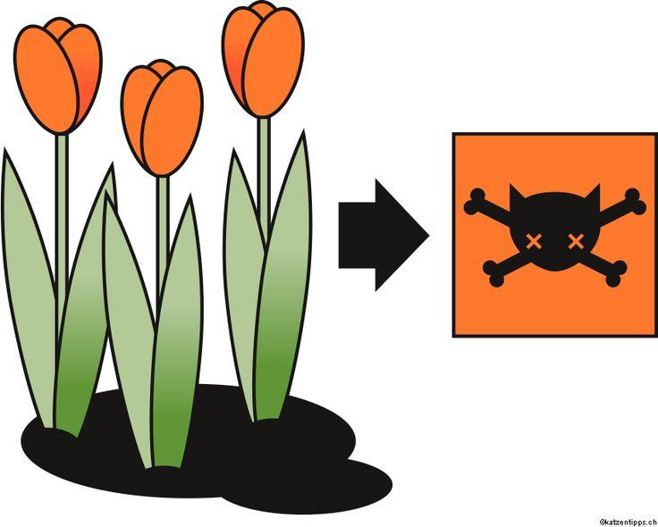 best 25 giftige pflanzen ideas on pinterest. Black Bedroom Furniture Sets. Home Design Ideas