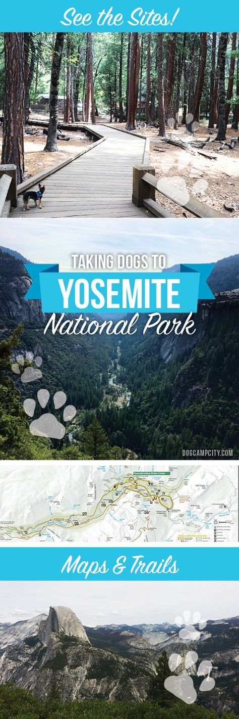 Explore Yosemite with Dogs - Advice, Maps and tips about where to go, hike and camp with your dog at Yosemite National Park, California. Dog Camp City - Hiking, camping and traveling with your dog