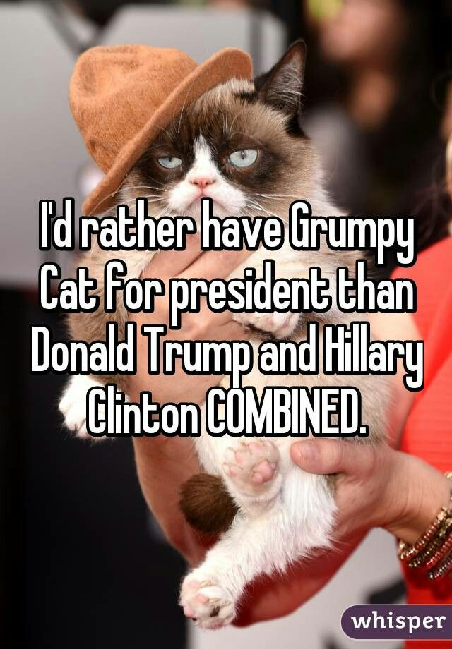 Grumpy Cat                                                                                                                                                      More