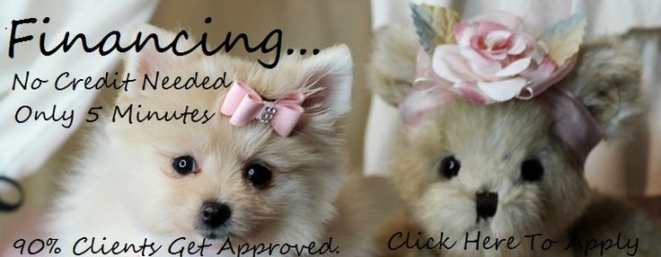 Teacup Adoption, Teacup adoption dogs for sale, Dogs for sale