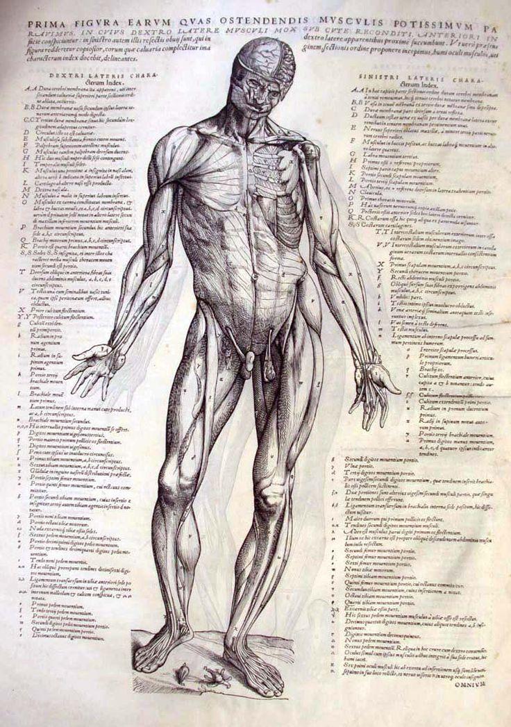 Andreas Vesalius, De Corporis Fabrica