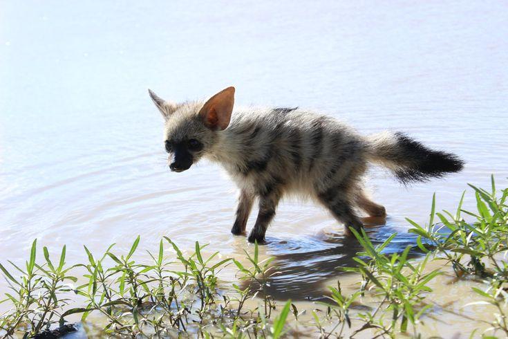 Dieses neu entdeckte Tier ist möglicherweise das süßeste Tier der Welt – Seite 8 von 1 …   – Wildlife