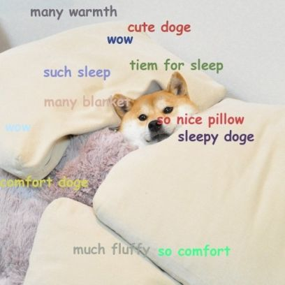 Cute Doge Meme Is Ready For Fluffy Sleep