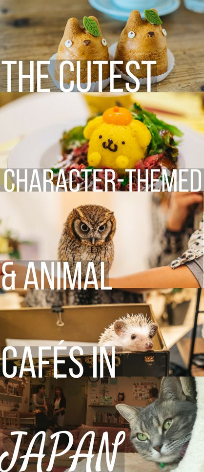 Want to go to the cutest character-themed and animal cafés in Japan? Then check out this guest post written by Candy and Crystal of Travel Pockets. They partially grew up in Japan and still go to Japan every year so they're experts on cute Japanese cafés!