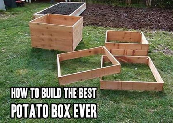 Best Potato Box - DIY Gift World