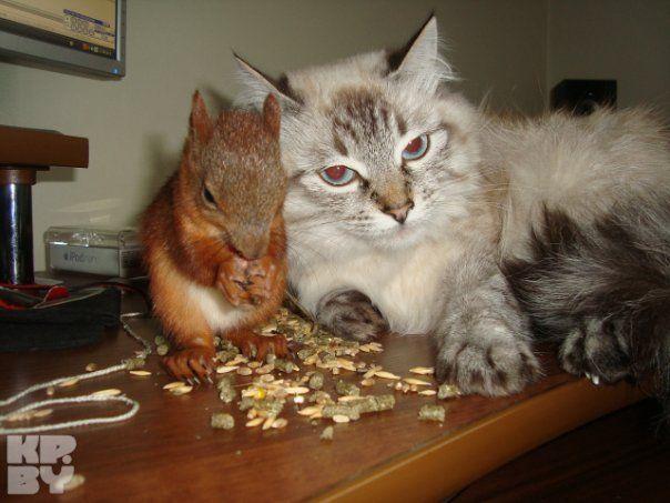 Минская белка-таксистка | Смешные мемы о кошках, Смешные ...