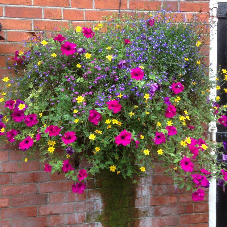 A riot of summer colour - a simple mix of petunias, bidens and lobelia.