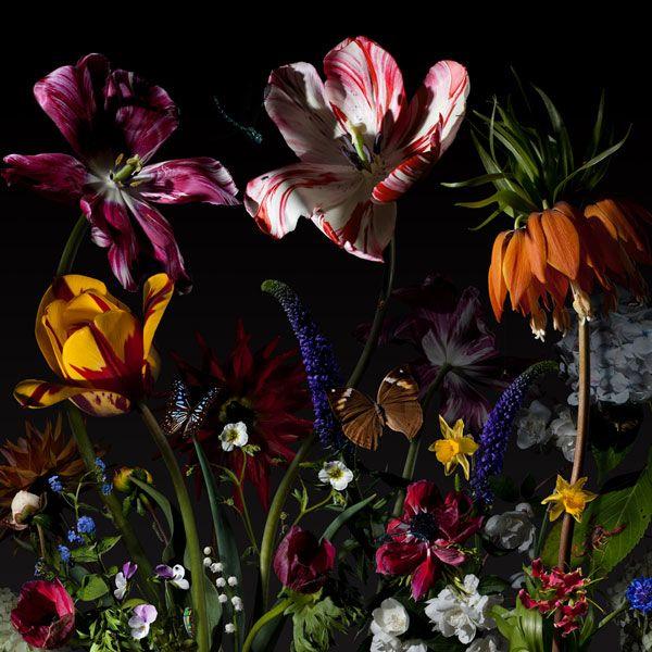 Bas Meeuws - Per van der Horst Gallery