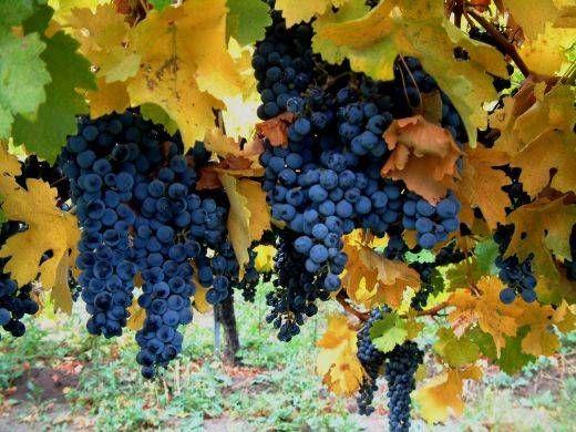 sicilian winery  #wine @PlonkOnline