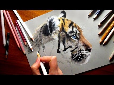 Colored Pencil Drawing: Cute Tiger Cub   Speed Draw Jasmina Susak How to Draw Realistic Animals - YouTube