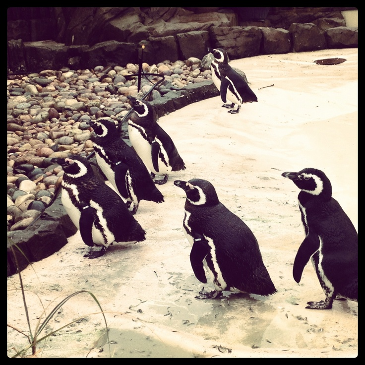Penguins ..... not the chocolate kind ;)