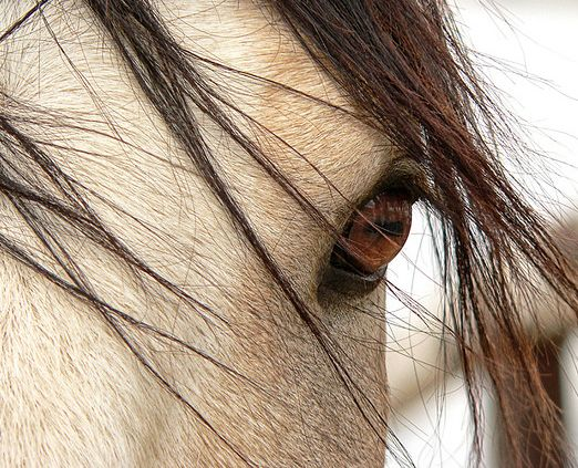 horse / eye to the soul