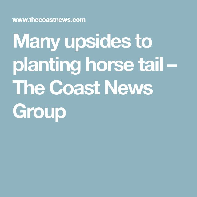 Many upsides to planting horse tail – The Coast News Group