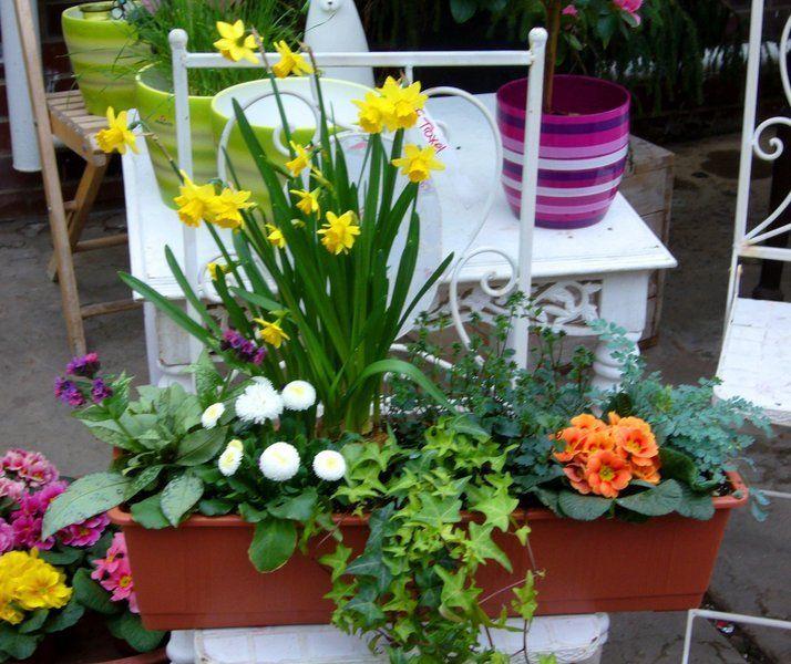 Bepflanzter Frühlings  Balkonkasten 60 cm