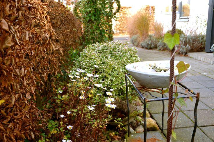 En blogg om trädgårdsdesign. Här hittar du bästa tipsen på hur du skapar drömträdgården! Trädgårdsdesigner, Helsingborg, Skåne