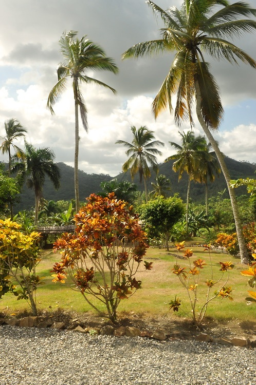 Punta Cana Landscape | View Cheap Vacation Packages! http://www.dreamtripsdepot.com