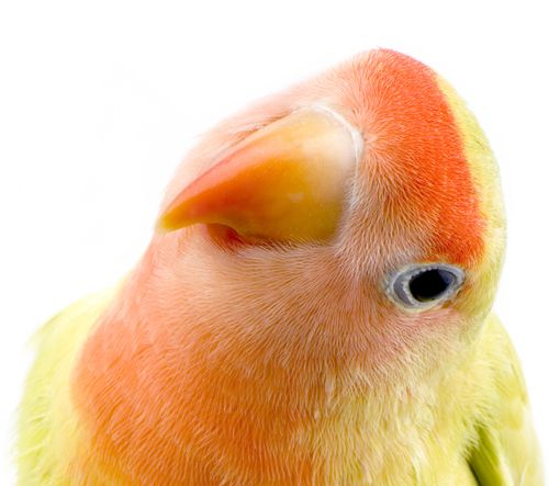 """""""Whatsup!"""" ;) from the Lovebird"""