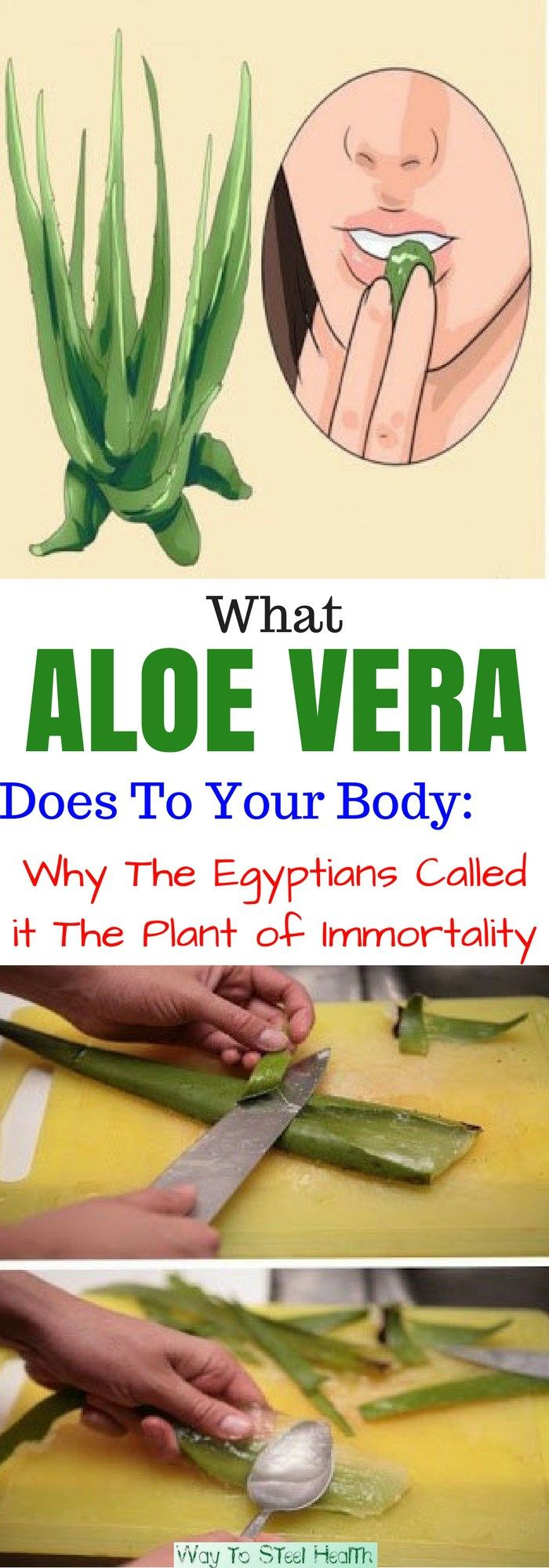 Aloe Vera, also known as Aloe Barbadensis, has become all the rage over the past few years.  But, did you know that keeping this decorative interior plant in your home is equally beneficial, too? As a matter of fact, Aloe Vera has been long used for medicinal purposes and had a special place in Greek,... Continue Reading →