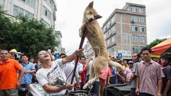 Petition update · Help Animals! / Email Chinese Presient Xi Jinping premier@mail.gov.cn · Change.org / https://www.change.org/p/ambassador-cui-stop-yulin-now-boycott-chinese-goods/u/20634898?j=91866&sfmc_sub=14464365&l=32_HTML&u=17003806&mid=7259882&jb=3&utm_medium=email&utm_source=91866&utm_campaign=petition_update&sfmc_tk=6UMe2p74Jcd3Hy7z0QizDJgSkyevYZLjdrfSVXWeC1PCGomDHLYZU7mEhgVWwzQd