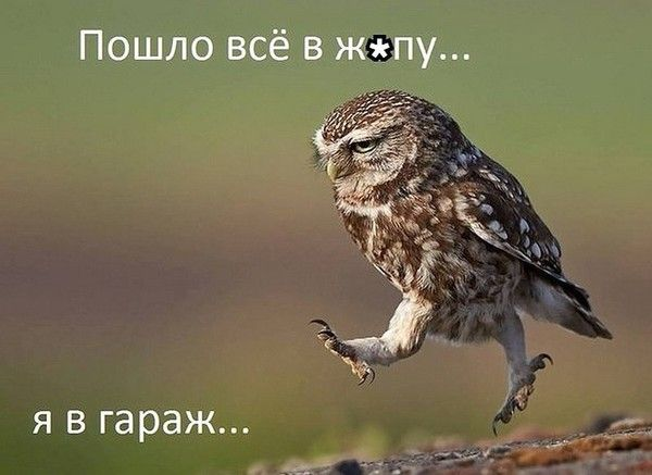 http://umor2013.ru/wp-content/uploads/v-garazh.jpg