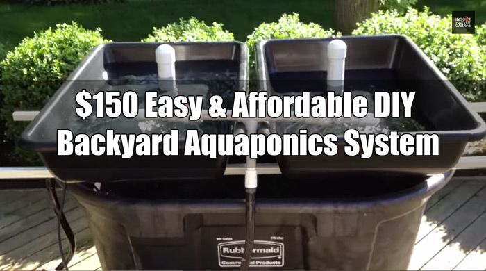 $150 Easy & Affordable DIY Backyard Aquaponics System