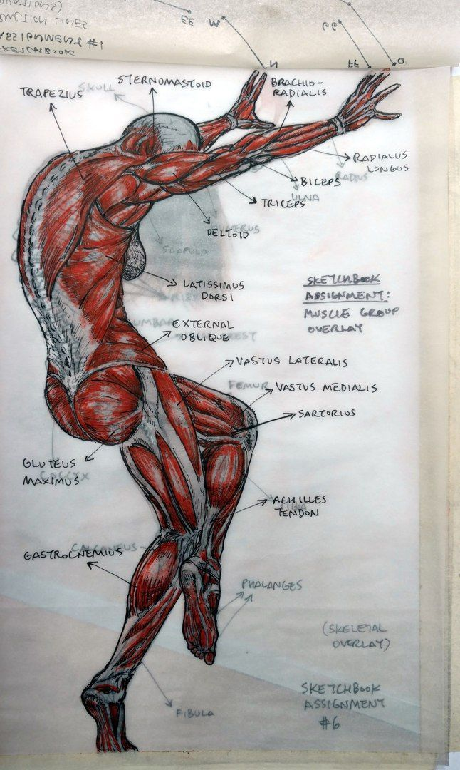 653 best Anatomy images on Pinterest | Human anatomy, Human body and ...