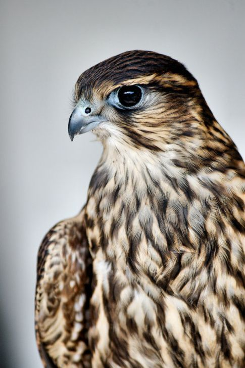 69 best Luciano images on Pinterest | Animales hermosos, Aves ...