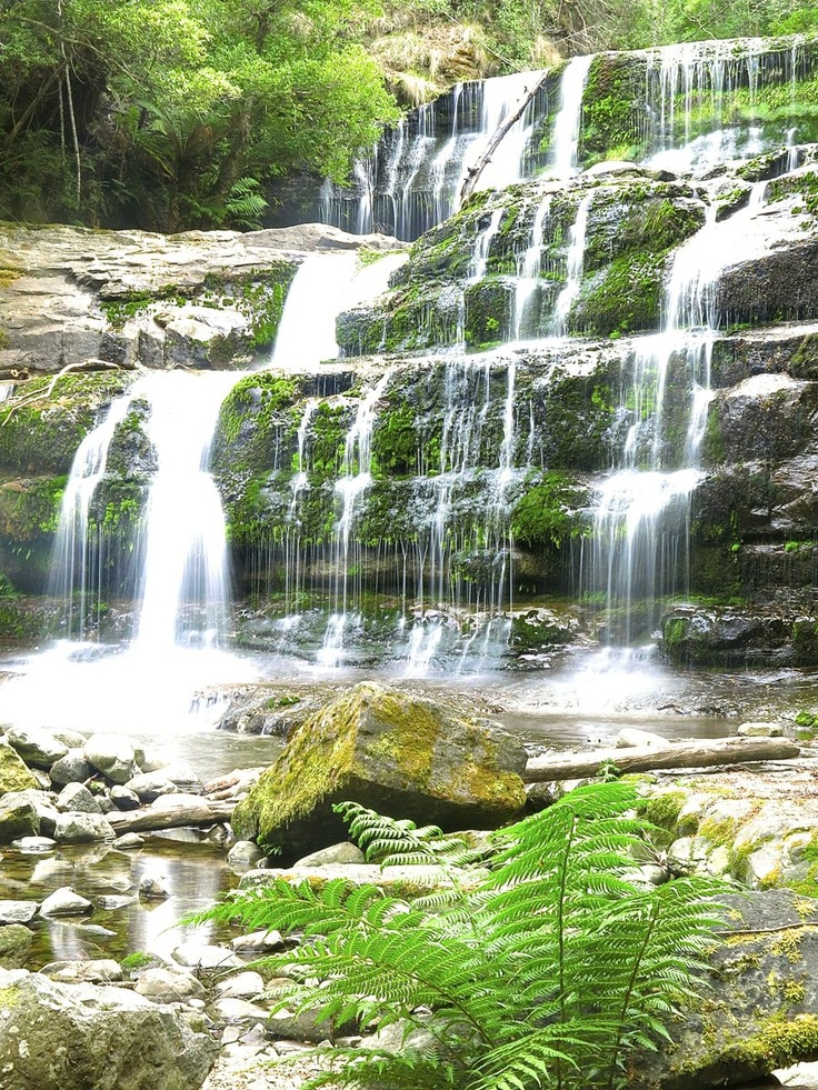 Liffey Falls in Tasmania, Australia For more great Tassie images visit http://mag.gobehindthescenery.com.au