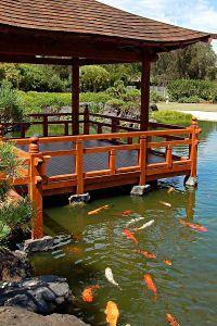 Make a koi pond: koi care and info