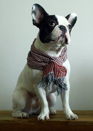 Cashmere Silk Scarf - Bouledogue Fran?ais dogCS by VIDA VIDA o9JX57i