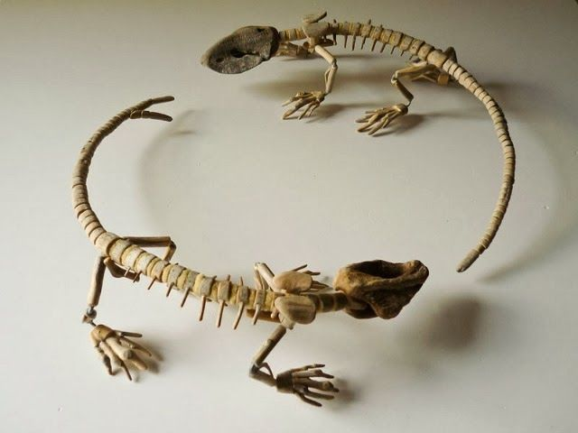 Fragile Skeletal Sculptures Crafted from Driftwood Found on Beaches | Junkculture