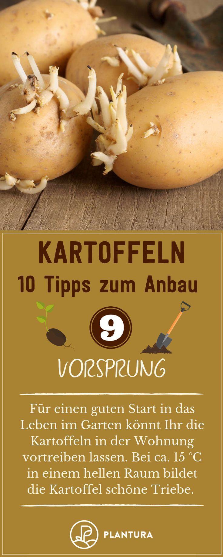 10 Tipps für den Kartoffelanbau im eigenen Garten