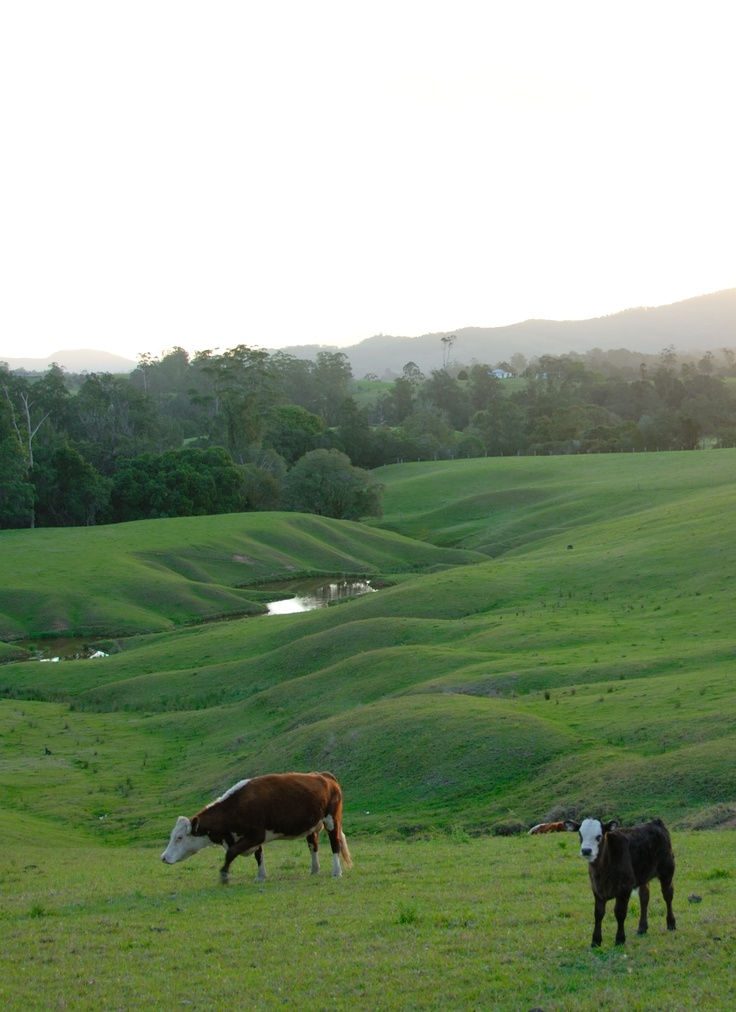 Wonder at the beauty of the hinterland early morning in the Nambucca Valley.