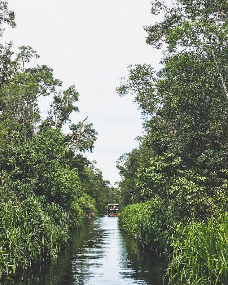 Cruising down the Sekonyer River into Tanjung Puting National Park where our goal was to encounter wild orangutans in their natural habitat.  #WonderfulIndonesia #TripofWonders