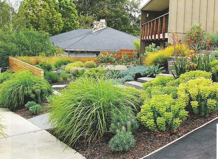 Best 25 kangaroo paw ideas on pinterest water tolerant for Easy care front yard landscaping
