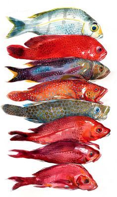 Stéphanie Ledoux - Carnets de voyage: La pêche du jour