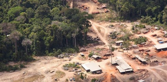 Holanda dice basta a la madera ilegal - http://verdenoticias.org/index.php/blog-noticias-medio-ambiente/170-holanda-dice-basta-a-la-madera-ilegal