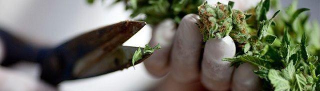 """""""5 nieuwe onderzoeken naar cannabis waar de media geen aandacht aan besteden"""" - http://www.ninefornews.nl/5-nieuwe-onderzoeken-naar-cannabis-waar-de-media-geen-aandacht-aan-besteden/"""