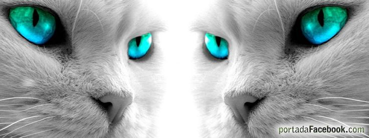 imagenes para la portada del facebook con mirada d felinos en 3d - Buscar con Google