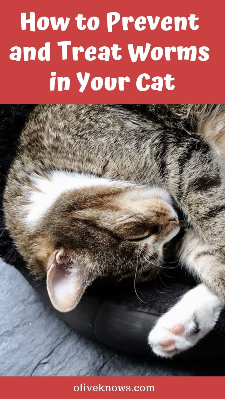 How To Prevent And Treat Worms In Your Cat Oliveknows In 2020 Cat Care Cats Cat Safety