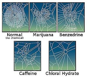 NASA experiment exploring how various chemicals we humans consume might effect a spider building a web... Not well, it seems! #Funda