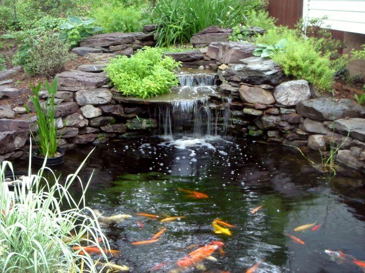 Backyard Pond With Waterfall And Koi