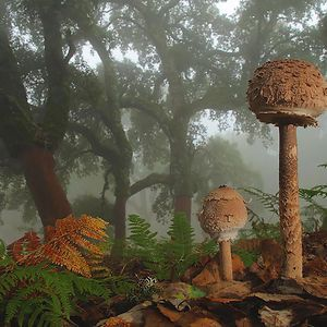 The Mystical World of Mushrooms