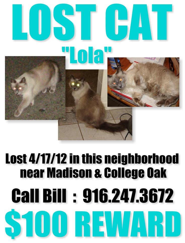 Sacramento LostCat Reward Madison/College Oak Lost