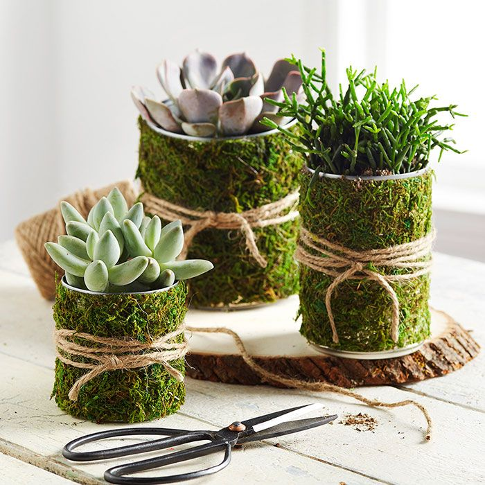 Create an easy succulent arrangement in upcycled tin can planters.