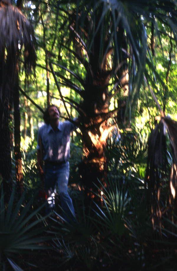 the pirates of the silverland palm Pirates of the silverland-palm oil piracy uploaded by uploader avatar normala  hamzah chicken run case studydoc copy uploaded by uploader avatar.