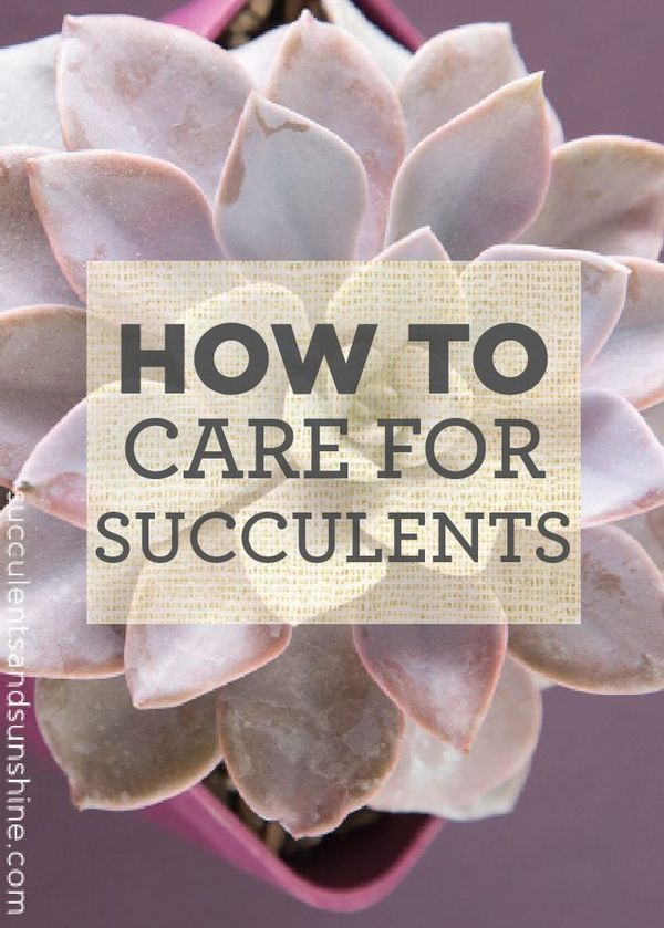Learn the basics of how to take care of your succulent plants for your home!