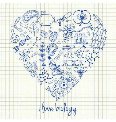 I love biology doodles in heart vector on VectorStock